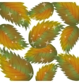 Pattern of autumn leaves vector image