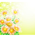Spring flowers background vector image vector image