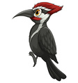 woodpecker vector image