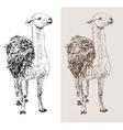 artwork lama digital sketch of animal vector image