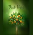 citrus tree vector image vector image