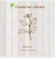 Marjoram essential oil label aromatic plant vector image