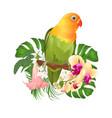 parrot agapornis lovebird tropical bird vector image vector image