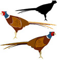 pheasant vector image vector image