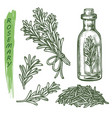 rosemary set herbs and aromatic spice seasonings vector image vector image