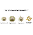 thrombocytosis thrombopoiesis platelet formation vector image vector image