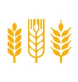 Wheat Ear Spica Icon Set vector image