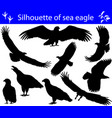 collection of silhouettes of sea eagles vector image vector image