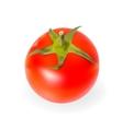 Fresh Tomatoes Isolated on White Background vector image