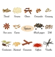 Icon set with titles of popular culinary spices vector image vector image
