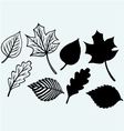 Maple leaves set vector image