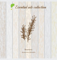 rosemary essential oil label aromatic plant vector image vector image