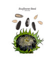 sunflower seed hand draw vector image vector image