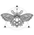 black and white butterfly over sacred geometry vector image vector image