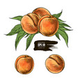 peach drawing vector image vector image