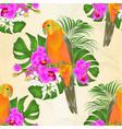 seamless texture sun conure parrot vector image vector image