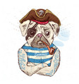 pirate pug dog on blue background vector image