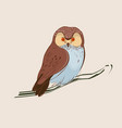 brown owl on branch vector image