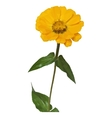 Flower Zinnia Low Poly vector image