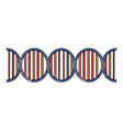 human dna symbol vector image