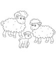 sheep lamb and ram vector image