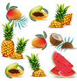 summer tropic fruits papaya pineapple fresh vector image vector image
