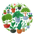 house flowers indoor floriculture round pattern vector image vector image