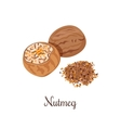 Nutmeg crushed spices vector image