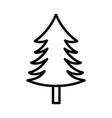 pine tree foliage botanical on white background vector image vector image