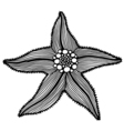 Black contour starfish vector image