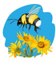 bumble bee flying over yellow flowers
