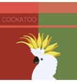 Cockatoo flat postcard vector image