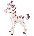 Cute Zebra Foal vector image vector image