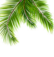 exotic tropical background with palm leaves vector image