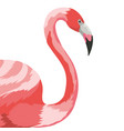 flamingo exotic and tropical bird vector image vector image