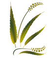grass weed vector image