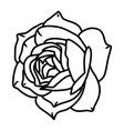 rose flower floral hand drawn design sign vector image vector image