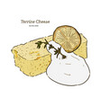 terrine cheese cake hand draw sketch vector image