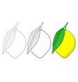 lemon hand drawn sketch vector image