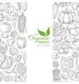 organic sketch fresh vegetables retro vector image