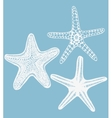 set of hand-drawn starfishes vector image