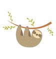 sloth hanging on tree adorable cartoon animal vector image vector image