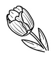 tulips flower floral hand drawn design sign vector image vector image