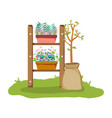 chelf garden with houseplants vector image