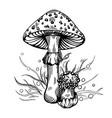 fly agaric mushroom vector image