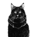 sitting blak cat vector image