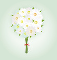 Chamomile Flower or White Daisy Daisy Bouquet vector image vector image