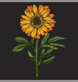 hand drawn daisy flower with stem and leaves vector image vector image