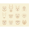 Popular breeds of dogs 12 linear icons isolated vector image