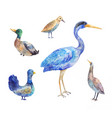 set of birds living in a swamp heron bittern vector image